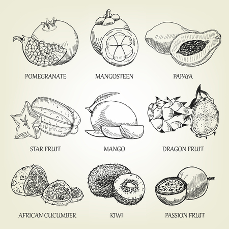 Hand drawn set of different tropical fruits. Outline realistic icons of healthy food. Vector sketch of exotic plants good for logo design, poster, banner creation, recipe book or restaurant menu.  イラスト・ベクター素材