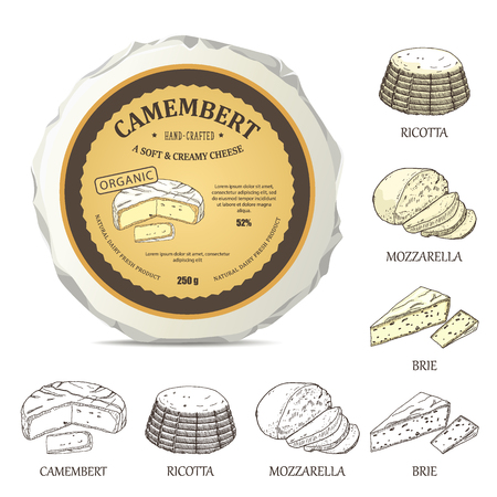 Round cheese mockup with camembert label. Vector illustration with vintage sticker. Hand drawn template used for advertising cheese and graphic icons good for logo design or emblem creation. Ilustração