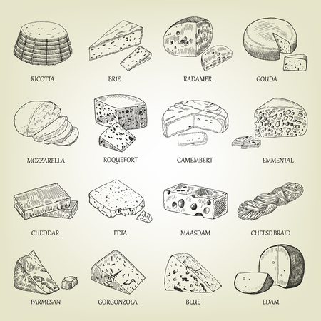Sketch of different cheeses icons. Vector illustration with realistic outline dairy products set. Curds collection used for logo design, recipe book, advertising cheese or restaurant menu.