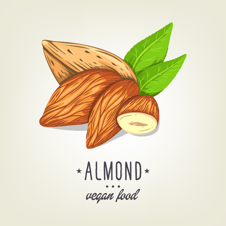 Colourful almond icon isolated on background. Vector sketch of realistic nut with leaves. Drawn vegan plant good for recipe book, booklet, card, menu or banner design.