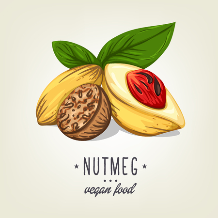 Realistic colour nutmeg with leaves and seeds. Vector icon of nuts isolated on background. Drawn vegan plant good for recipe book, booklet, card, menu or banner design.