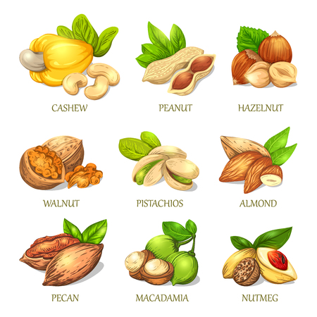 Colourful sketch of different kinds of nuts. Vector isolated kernels collection. Realistic outline icons can use for a logo, emblem creation or for a recipe of vegetarian nutrition. Ilustrace