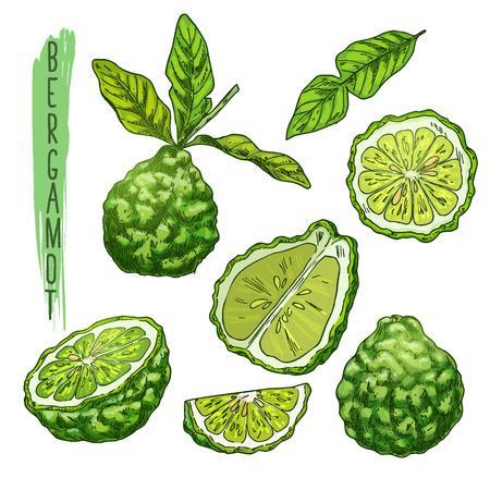 Fruit of bergamot orange or kaffir lime. Illustration