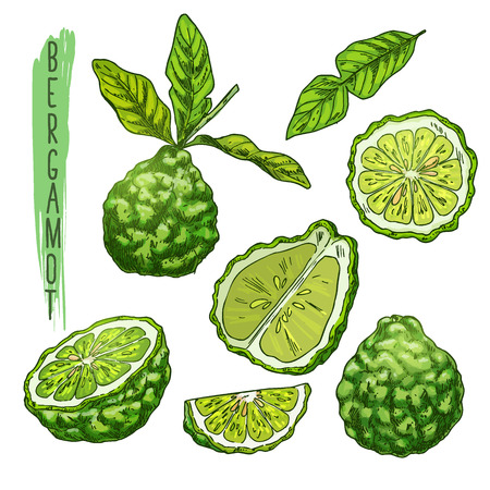 Fruit of bergamot orange or kaffir lime. Stock Illustratie
