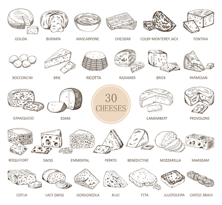 Set of isolated sketches of cheese types. Illustration