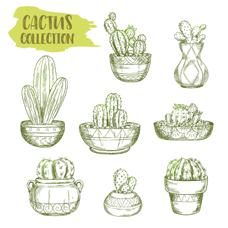 Set of isolated sketches of cactus. Hand drawn succulent desert plant cacti. Mexican or american prickly plant in green watercolor. Pot with south flora. Botany and vintage theme