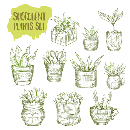 Set of isolated green succulent plants. Hand drawn botanical garden plant in pots. Decorative desert rose bouquet in vase. Vintage interior decoration with agave, aloe vera. Botany and floral, florist Ilustração