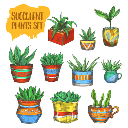 Set of isolated colorful succulent plants. Green nature in pots or houseplant plate. Decorative aloe vera or home agave in vase. Tropical or scandinavian bouquet for interior. Home landscaping, flower Illustration