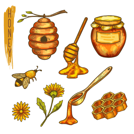 Set of isolated apiculture items. Honey and spoon, bee or wasp, honeycomb hex and hive, flower and jar, hexagon and insect, dipper and cell. Beeswax and furming, bumblebee and farm, organic Ilustração
