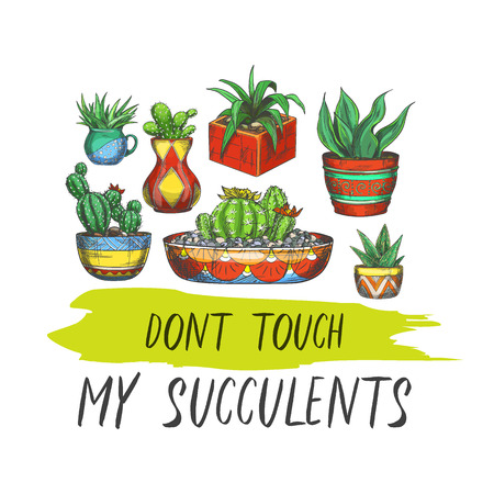 Sign with cactus in pots or banner with succulent plants in box. Colorful mexican or american plant with thorn collection, label with peyote or exotic colorful flora. Botany, nature, gardening theme Banco de Imagens - 122819573