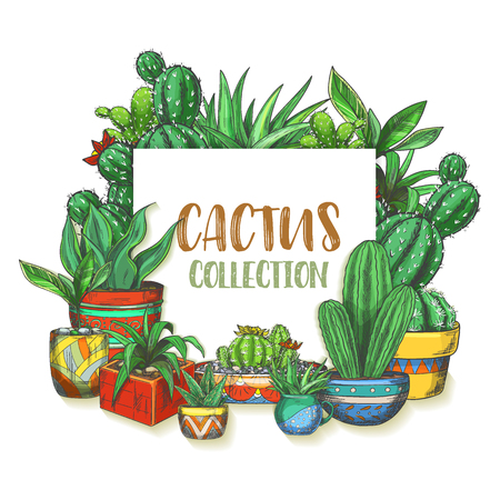 Banner with hand drawn cactus in boxes. Sign with colorful mexican cactaceae in pot or watercolor cacti. Succulent plant with flower, peyote blossom. Flora and botany, dessert theme