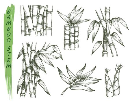 Set of isolated sketches of bamboo stalk Illustration