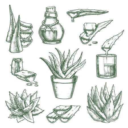 Set of isolated aloe vera sketch and hand drawn flower pot, bottle with medicine or cosmetic liquid. Vintage succulent prickly plant or herbal juice in glass. Organic and nature, beauty treatment