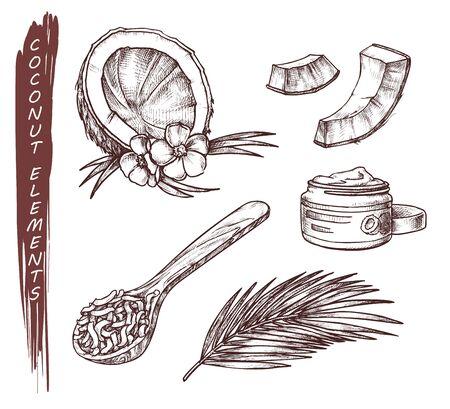 Vector sketch of coconut fruits, coconut butter