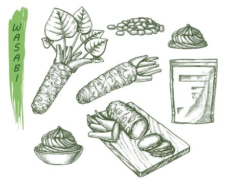 Vector sketch for wasabi or japanese sashimi, sushi and horseradish root. Drawing with cutting board and sauce spill, grater or rasp, seeds, spice plant tuber. Japan food and asian vegetable, spice Ilustração
