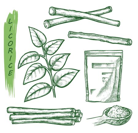 Licorice sketch, vector cooking herbs and spice seasonings package design. Hand drawn licorice or liquorice plant and root elements, herbal condiments, sweet flavoring and spice ingredients