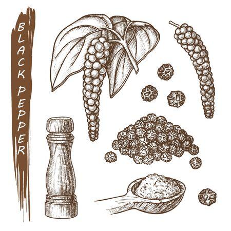 Set of black pepper spice, peppercorns sketch