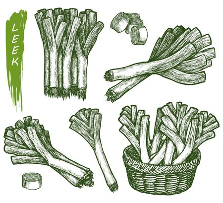 Sketch leek plant, salad and spice, food cooking