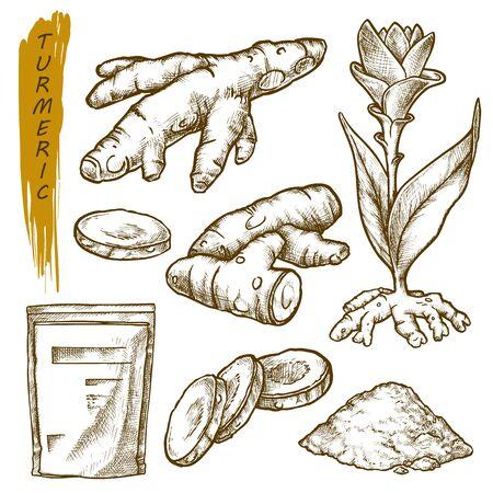 Kurkuma-Skizze, Gewürzpflanzenwurzel-Vektor-botanische Illustration würzen. Handgezeichnete Kurkuma-Wurzeln, kulinarische und kochende Curry-Curcuma-Zutat, Gewürzverpackungsdesign