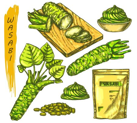Vector color sketch for wasabi or japanese sashimi, sushi and horseradish root. Drawing with cutting board, sauce spill, grater or rasp, seeds, spice plant tuber. Japan food and asian vegetable, spice 向量圖像