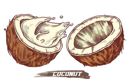 Sketch of coconut fruit, coconut milk splash