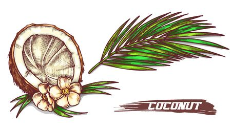 Sketch of cracked coconut with flowers and leaf 일러스트