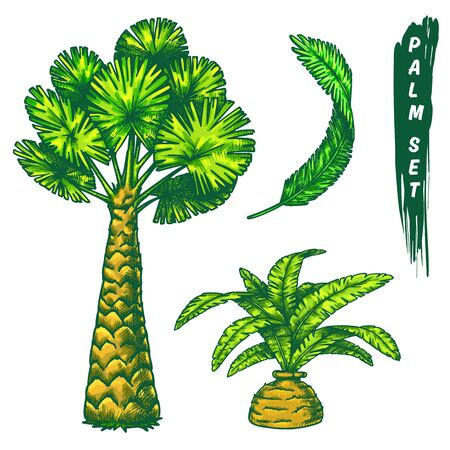 Set of garden palm, hand drawn sketch in color. Ilustrace