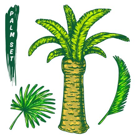 The chilean wine palm with leaves outline