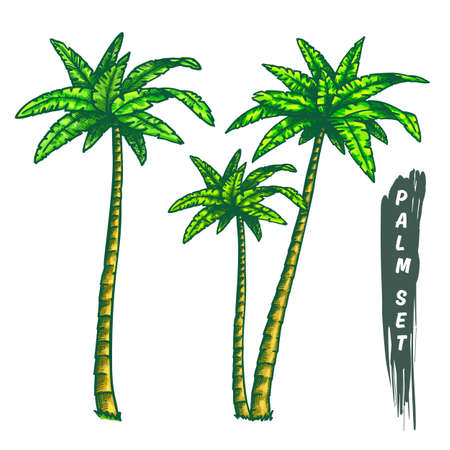 Set of isolated coconut palm tree in color Ilustrace