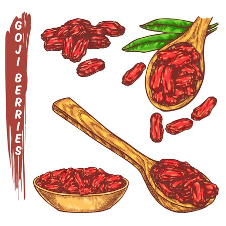 Dried godji beries elements. Colorful sketch of organic berries for package vector design. Barberry or wolfberry or goji fruits for drink and superfood diet