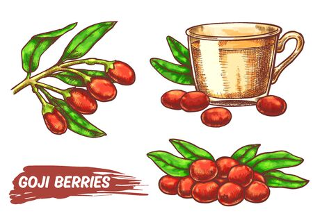 Godji set with branch, ripe berries and cup of tea. Sketch of organic super food nutrition for package design. Vector hand drawn barberry or wolfberry berry. Fruits for drink and superfood diet Ilustrace