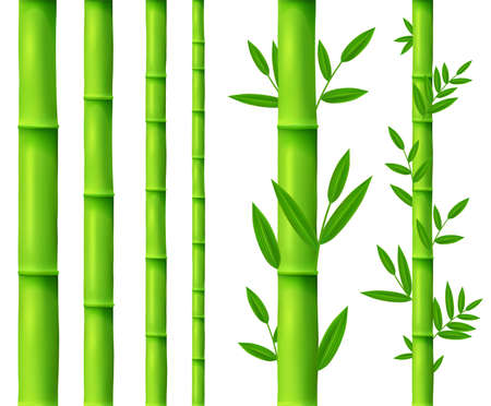 Bamboo tree leaves and plant, sticks or sprouts