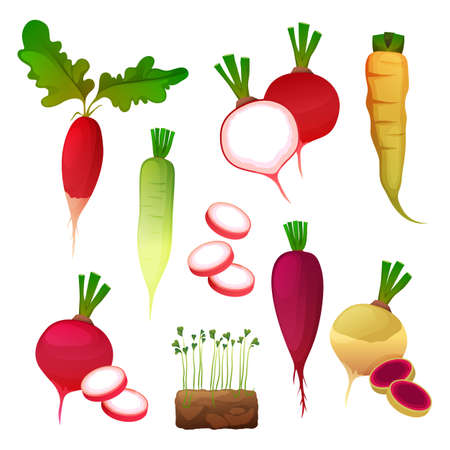Set of food from radish, vegetable products