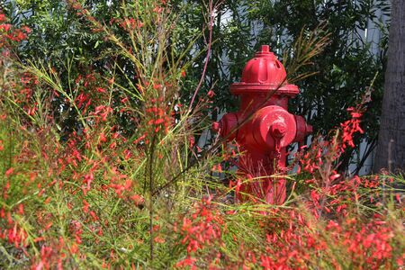 borne fontaine: Red Hydrant