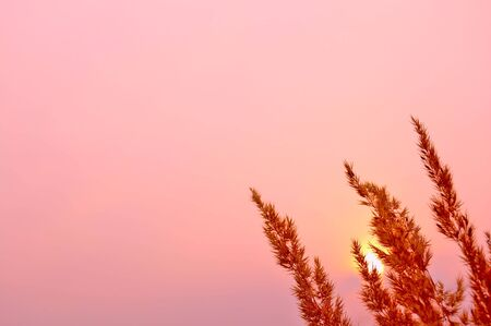 Pink sunset Stock Photo