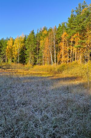Autumn morning in the forest.