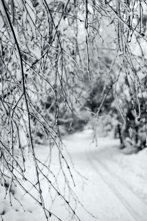 Forest ski track photographed against the backdrop of the branches. Stock Photo
