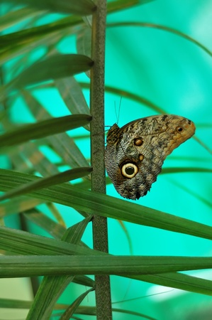 Big beautiful butterfly on a green branch