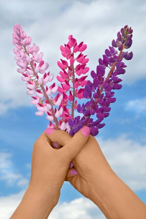 Bouquet of colorful wildflowers Stock Photo