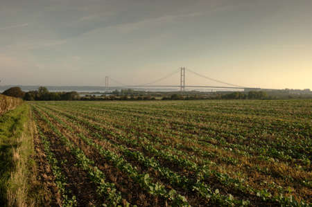 yorkshire and humber: The farmland on the banks of the Humber is very rich agricultural land. Years of rich deposits of silt and sediment have made the land very fertile.