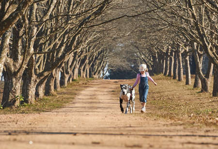Young girl running with her dog great dane. Girl and dog running on farm road tree lined avenue