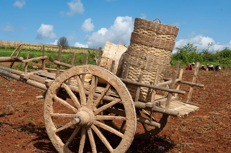 farm implements: Potato Picking in Shan State, Myanmar