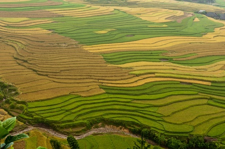 Rice Fields, Mu Canh Chai