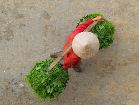 Vegetable Seller, Sapa, Vietnam photo