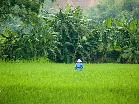 conical hat: Rice Field, Mai Chau, Vietnam Stock Photo