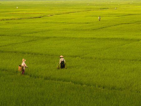 paddy fields: Rice Fields, Phu Yen, Son La, Vietnam Stock Photo