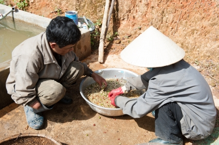 dat: Hand Washing Hulled Coffee Beans, Vietnam