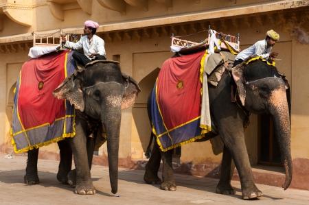 amber fort: Elephants, Amber Fort