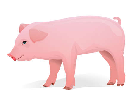Realistic pig illustration Stock Vector - 12192225