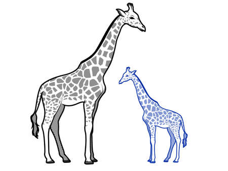 crosshatch: Giraffe Line Art Illustrations